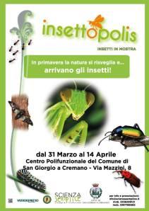 insettopolis